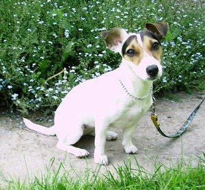 education jack russel aquitaine
