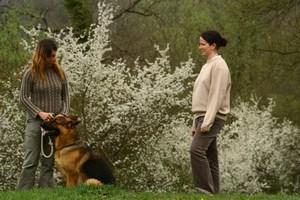 séance individuelle en éducation canine