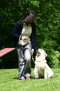 apprendre le assis a son chien
